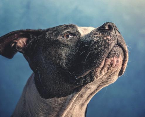 Hunde oder der beste Freund des Menschen